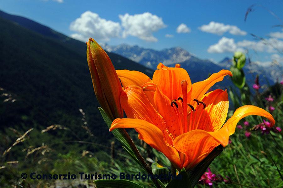 flora-bardonecchia